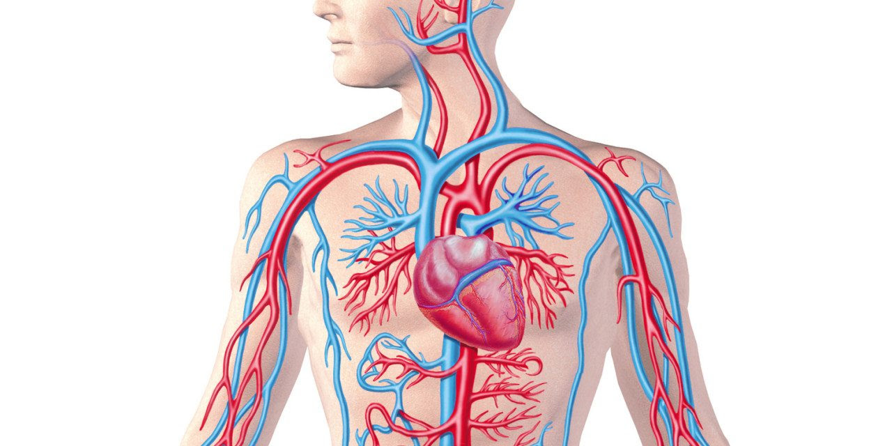 CirculatorySystem_Full view_cropped 1280x640