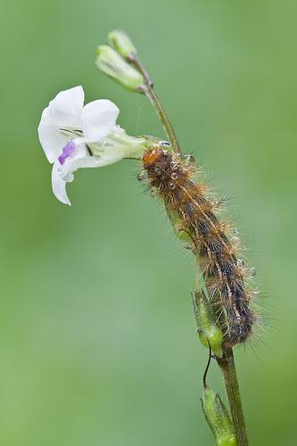 wet caterpillar natural light shot IMG_8798 copy