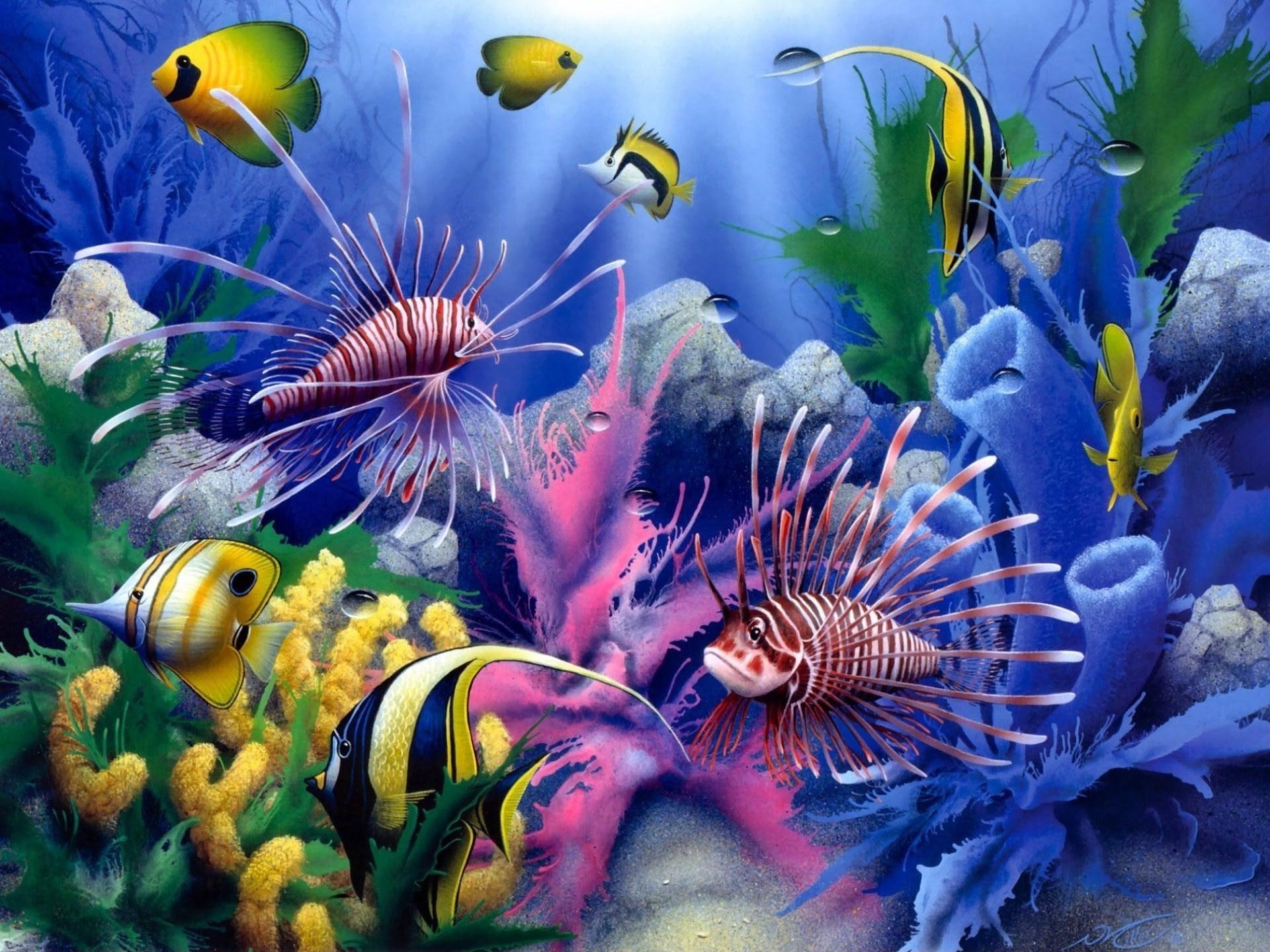 Sea Animal Wallpaper 55 Images