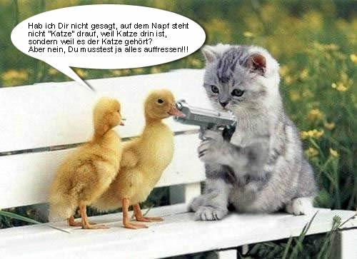 Katze bedroht zwei Enten mit Waffe