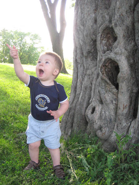 Will & the tree, 1