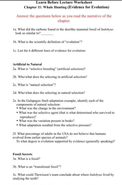Evidence For Evolution Worksheet - Nidecmege