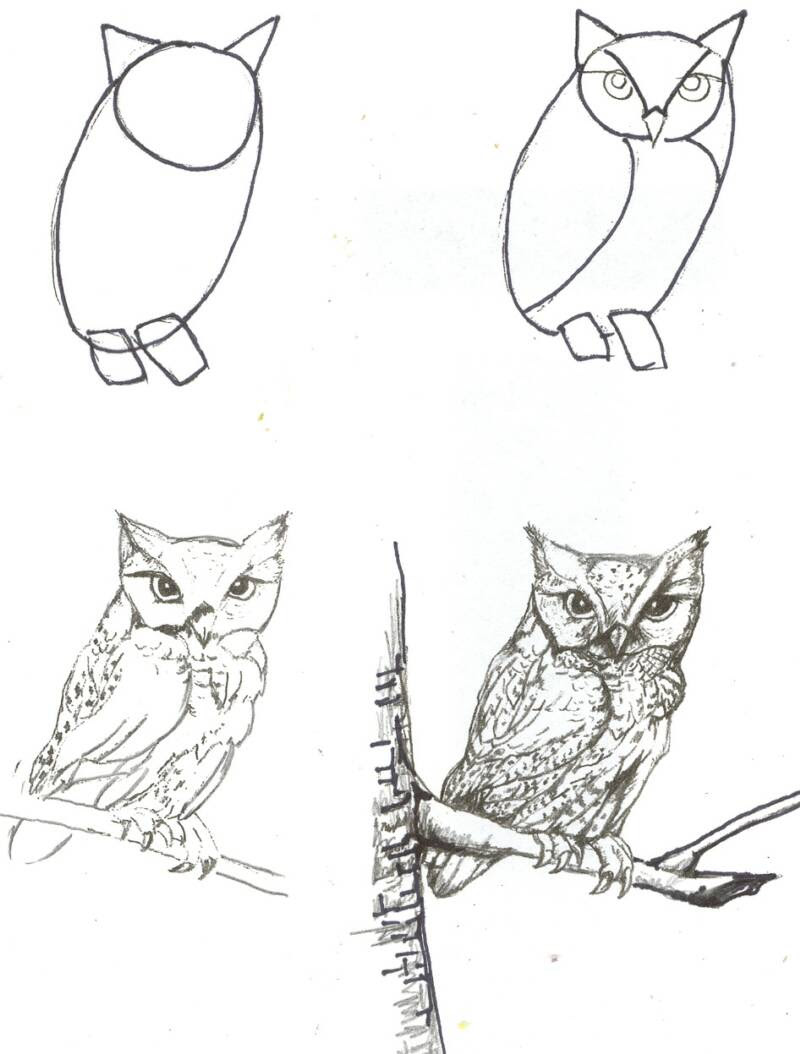 Orasnap Easy How To Draw A Realistic Owl Step By Step