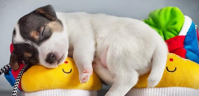 Cómo ayudar al perro a dormir mejor
