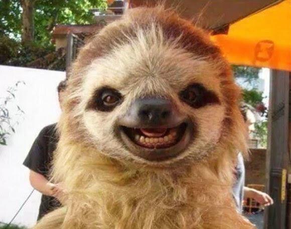 cute-smiling-animals-251