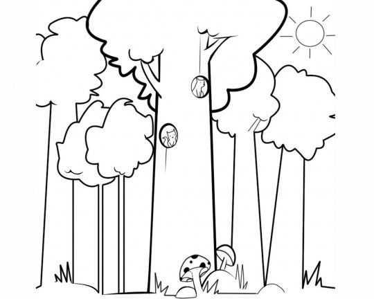 Orman Haftası Etkinlikleri 11 Okul öncesi Etkinlik Faliyetleri