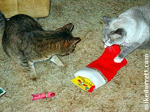 Christmas with Santa Cat