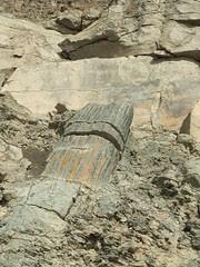 fossil tree
