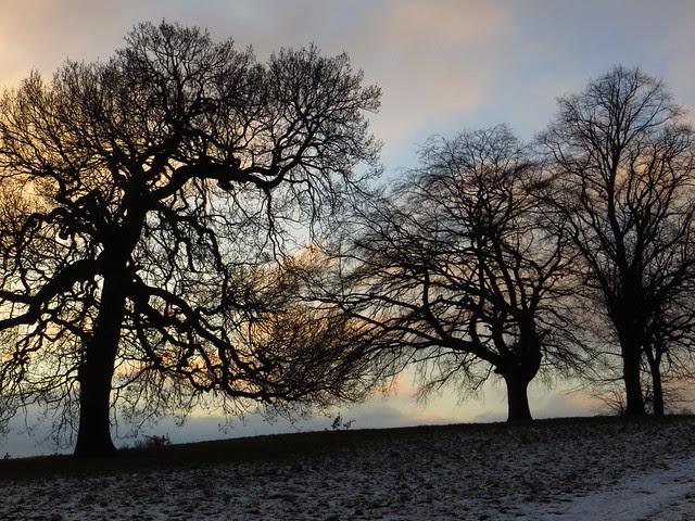 Trees on Tumulus Field