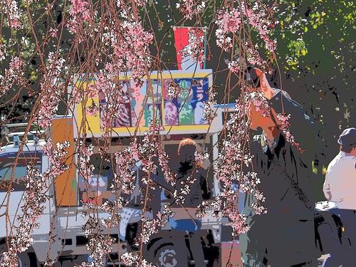 枝垂れ桜 by リーニュクレール