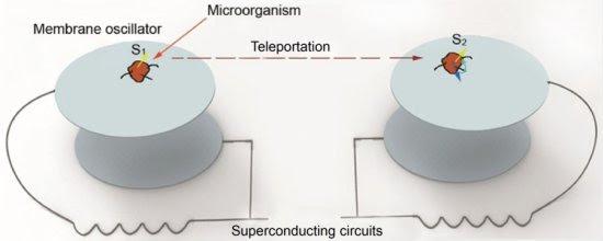 Primeiro experimento para teletransportar memória de organismo vivo