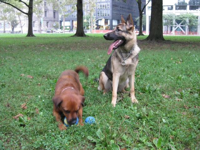 Downtown Dog Owners Fight Leash Rules in Battery Park