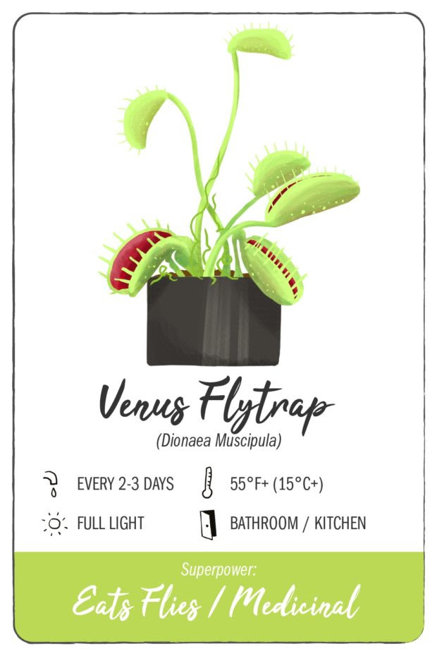 11 Houseplants With Superpowers