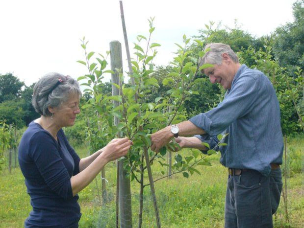 Nick Wright in the Dorking Community Orchard