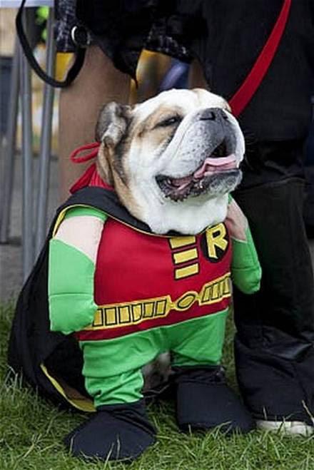 Σκυλιά με απίθανα ρούχα (2)