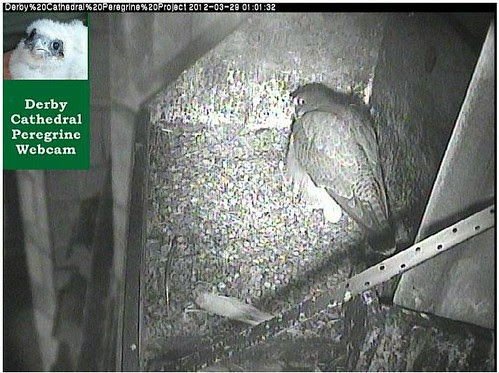 First egg laid 29.03.2012 at  01:03