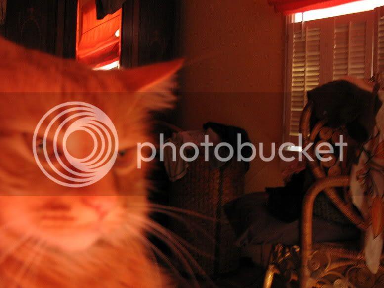 http://img.photobucket.com/albums/v216/buffalosean/IMG_0312.jpg