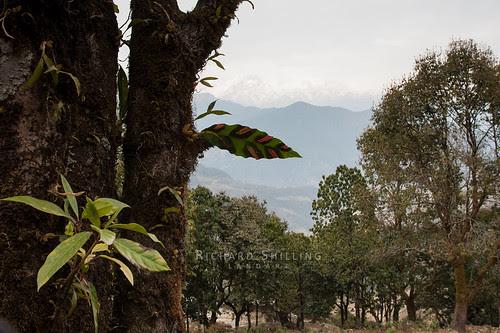 Jungle Leaf by escher is still alive