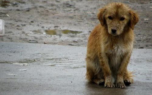 Héroes anónimos llenan de cajas térmicas las calles para que perros sin hogar no mueran de frío