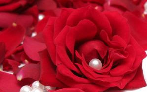 66 Romantic Rose Wallpaper Hd Terbaik