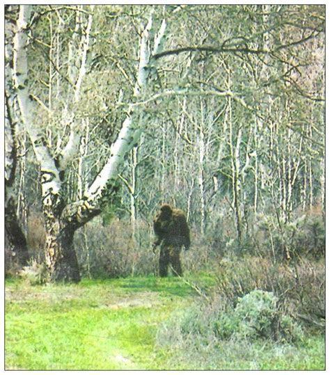25  bästa Bigfoot sasquatch idéerna på Pinterest