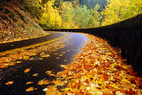 Historic Highway, Autumn Study #1