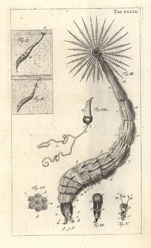 Jan Swammerdam - Bibel der Natur 1752 www2.hu-berlin.de - humboldt print of month