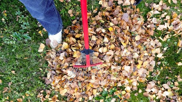 Is Your Yard Dying? Restore It with These 4 DIY Tips