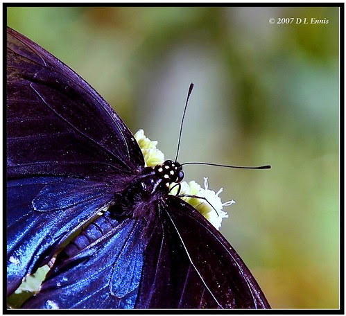 Taste the Nectar