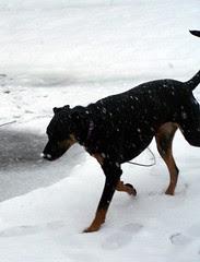 Lola_snow32808