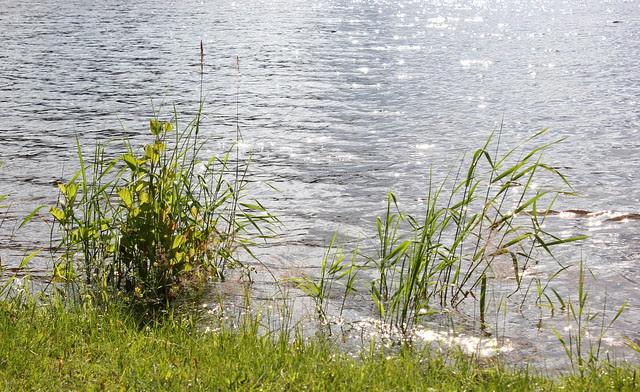 Savonlinna, Ähtäri 2012 220