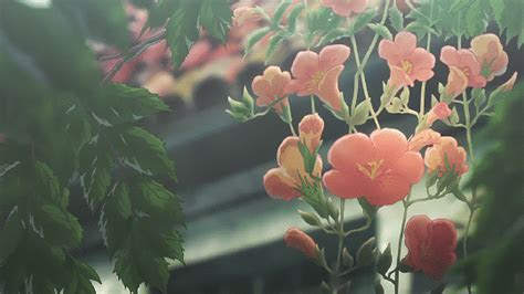 anime gifs xap   anime flower anime scenery