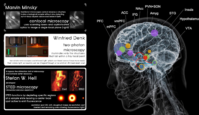 Infographic : Visualizing the brain at the cellular level