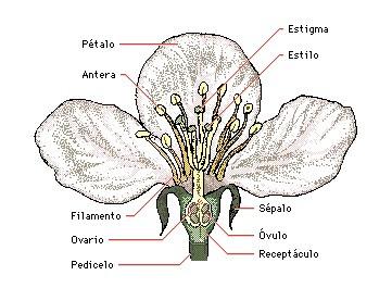 Partes De La Flor Para Ninos Para Completar