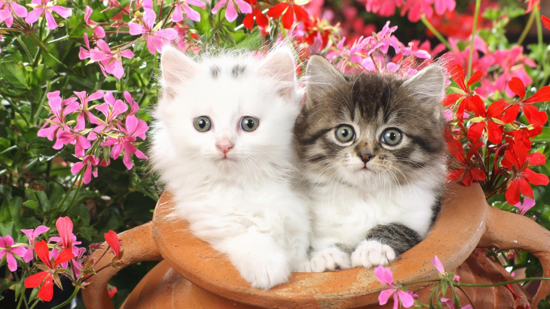 Cute Baby Cats And Flowers Wallpaper Wallpaperlepi