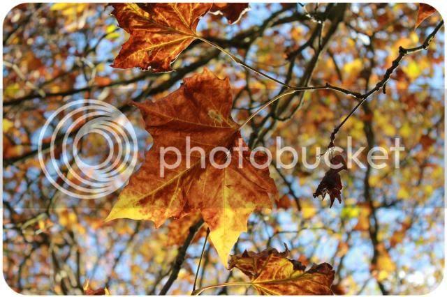 kugelfisch-blog: Herbst