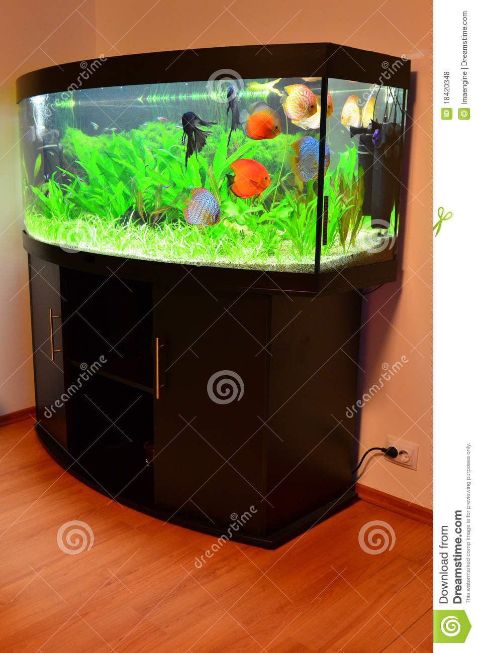 Home Aquarium With Discus Fish And Plants Royalty Free Stock ...