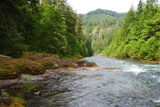 Looking downstream at the Rocky Beach at Clackamas River Trail