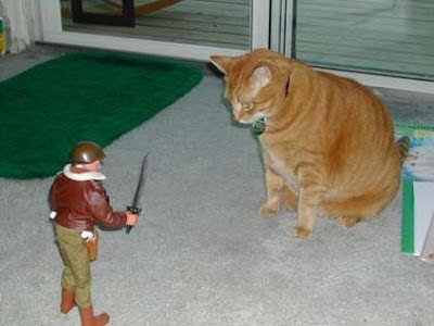 Funny Army Cat