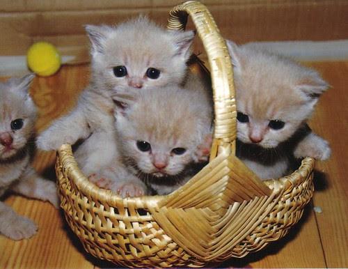 3,5 E in a basket