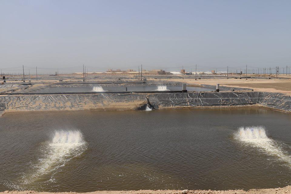 8- جانب من الأحواض السمكية بمزرعة بركة غليون