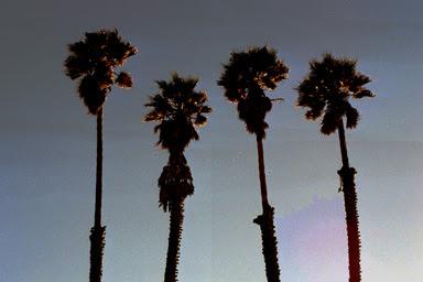 psych palms