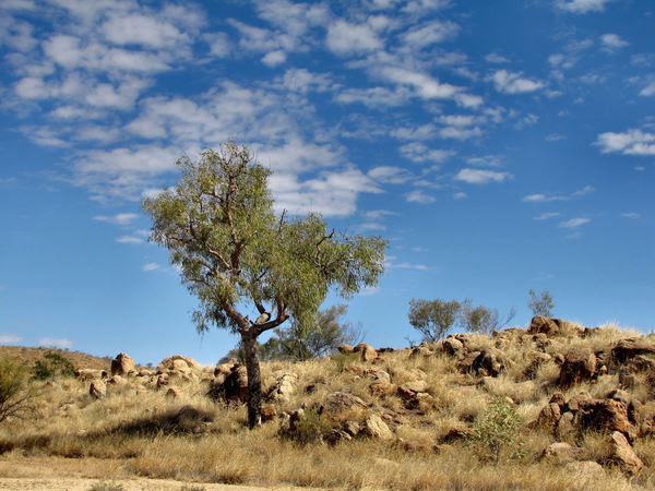 dry brown centre2: dry and rocky terrain in Central Australia