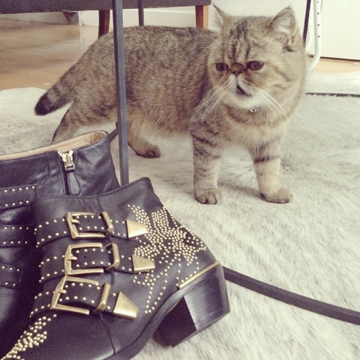 LE FASHION BLOG INSTAGRAM PICTURES CHLOE SUSANNA STUDDED BOOTS FROU EXOTIC SHORTHAIR FUNNY CUTE FASHION CAT PHOTO PIC 4