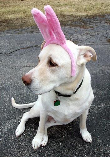 Zeus_bunny_411f