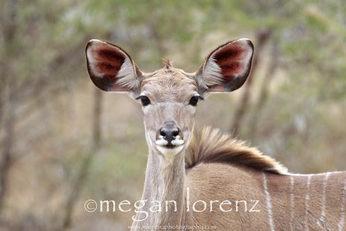 I hear everything! by Megan Lorenz