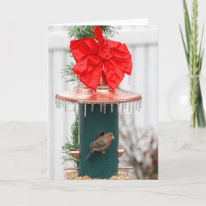 Icy Bird Feeder with Bird card