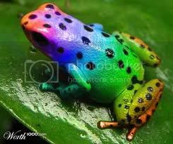 rainbow frog Pictures, Images and Photos