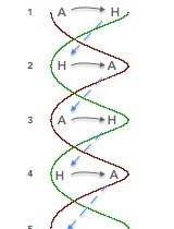 intersection double helix