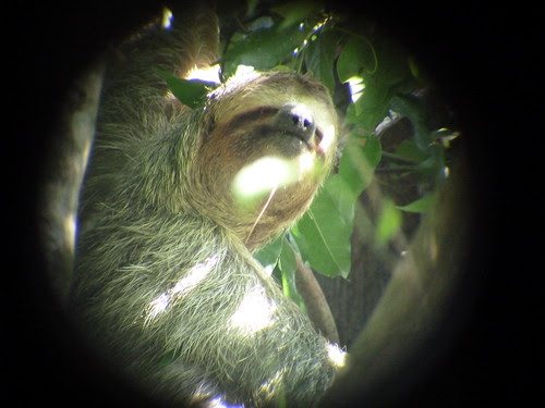 Sloth at Manuel Antonio Park, Costa Rica